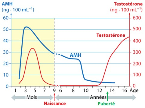 testosterone cycle for women