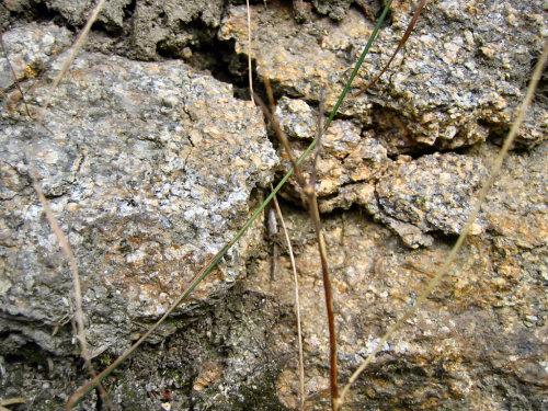 Arène granite