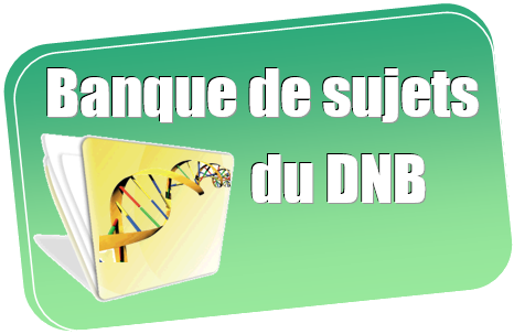 banque_dnb