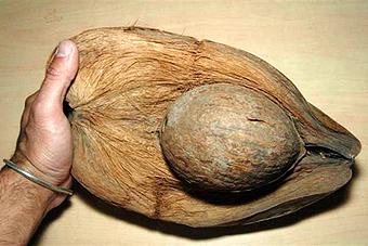 Intérieur d'une noix de coco
