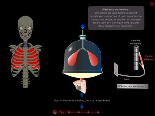 pulmo3