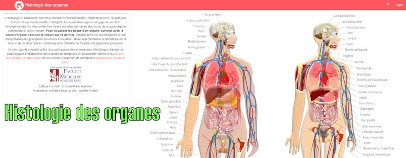 Histologie des organes