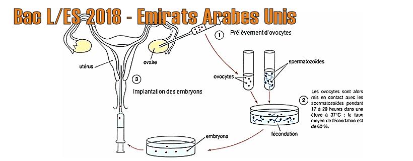 Bac ES/L 2018 – Émirats Arabes Unis