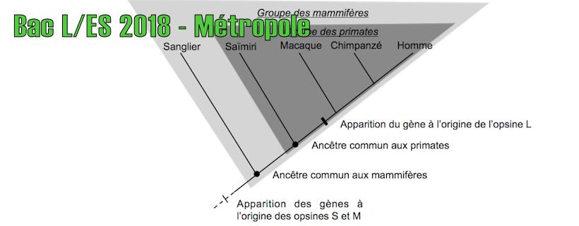 Bac ES/L 2018 – Métropole