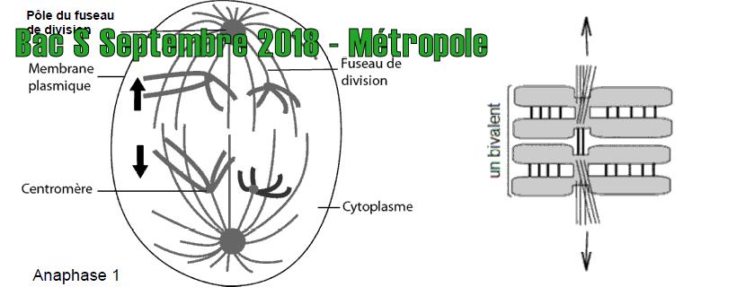Bac S Septembre 2018 – Métropole