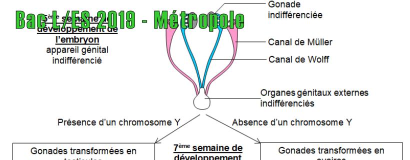 Bac ES/L 2019 – Métropole
