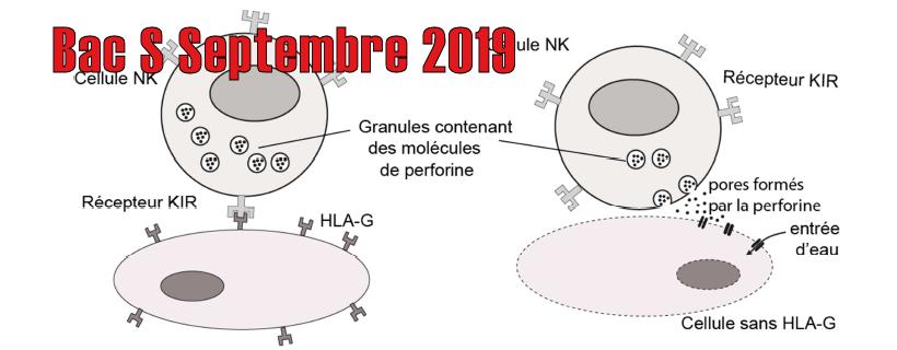 Bac S Septembre 2019 – Métropole