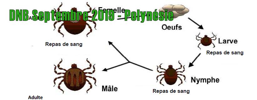 DNB Septembre 2019 – Polynésie