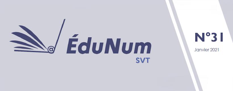 Lettre Edu_Num n°31
