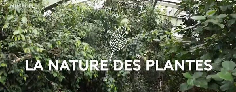 Web-série «La nature des plantes»